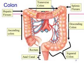 spleen bowel function picture 18