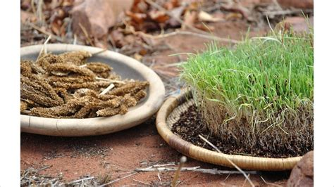 african culture burning herb remedy picture 3
