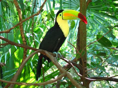diet of a toucan picture 10
