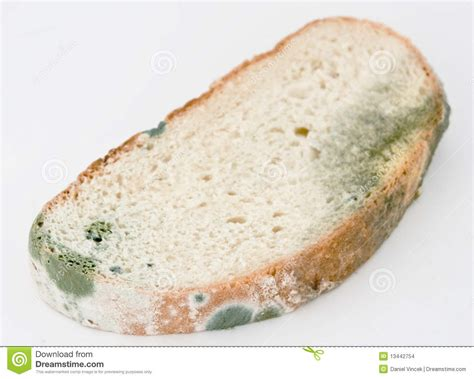 fungus on bread picture 17
