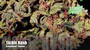 super strong weed strains thc 2014 picture 7