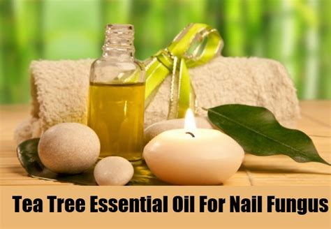 tea tree oil treatment for nail fungus picture 2