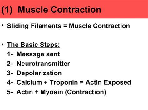 anatomy of skeletal muscle fiber picture 15