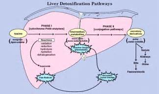 oxycodone and elevated liver enzymes picture 13