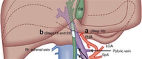 clostridium and liver damage picture 1