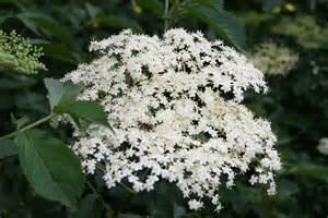 herbal medicine courses online picture 3