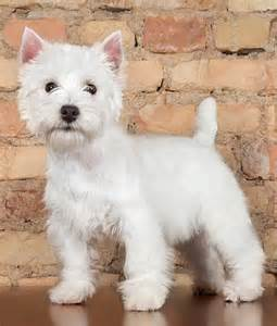 how to whiten a dog picture 3