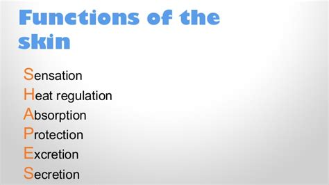 functions of the skin picture 3