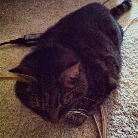 cat liver failure picture 2