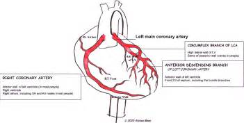 heart arteries diagram picture 1