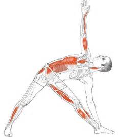muscles around the knee joint picture 7