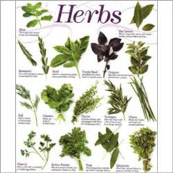 list of bangladesh herbal medicine company picture 10
