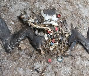 marine debris picture 14