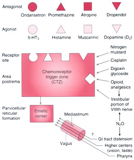 cellulite and laser insute picture 9