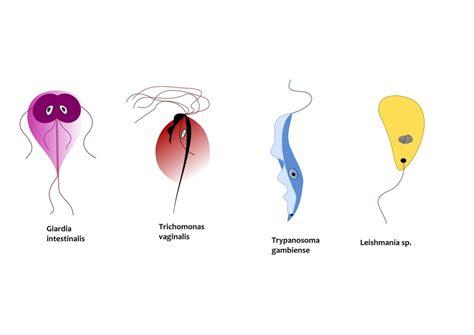 urine yeast picture 19