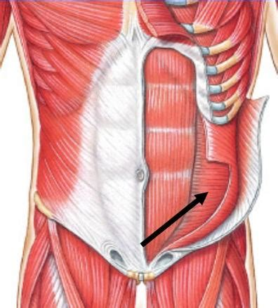 anatomy deep back muscle picture 14