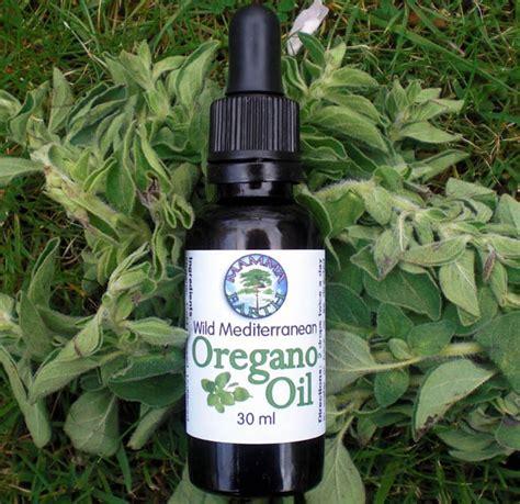 oregano oil and boils picture 6
