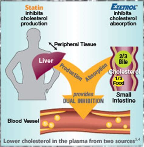 Cholesterol lowering vitamins picture 13