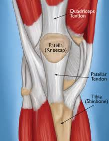 muscle tendon tears picture 11