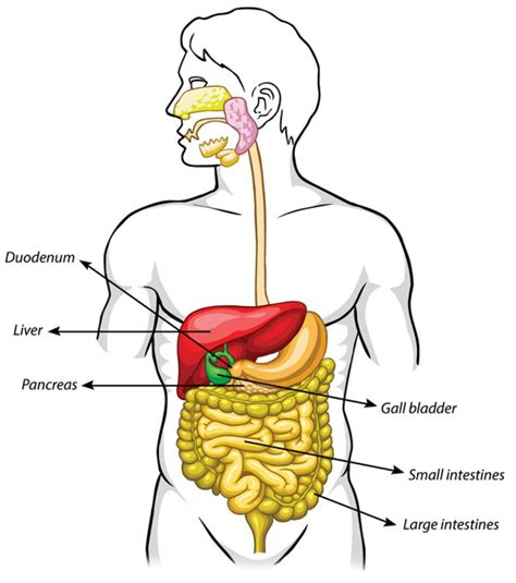 what are the symptoms of a gall bladder picture 7