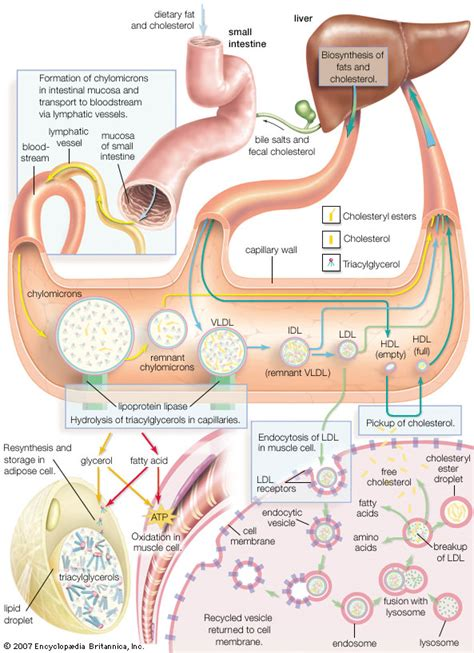 food low in cholesterol picture 1