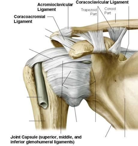 joint capsular sprain picture 2