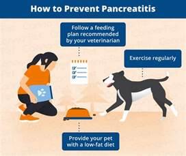 canine diet pancreais picture 14