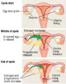 menstrual cycle stopped remedy picture 13