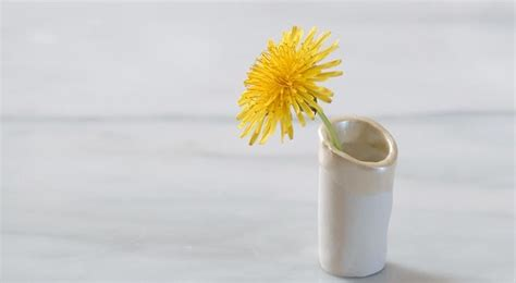cancer & dandelion root picture 14