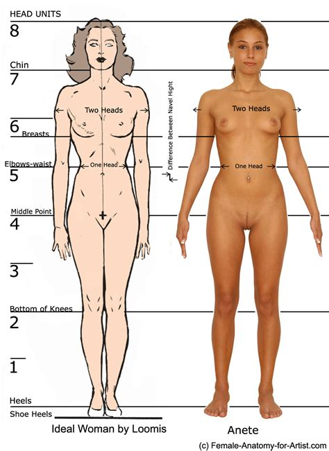 what is the length of a female human picture 7