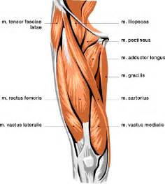 indentation in upper thigh picture 2