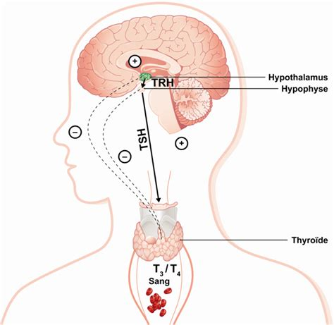 super high thyroid hormone picture 13