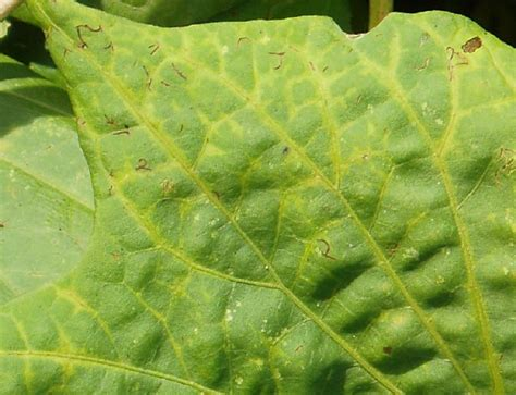 can sweet potatoes cause herpes simplex picture 8