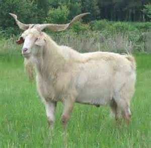 goat milk for hair growth picture 9