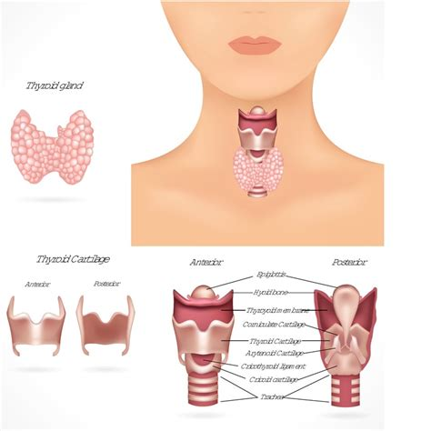 fibroids and underactive thyroid picture 15
