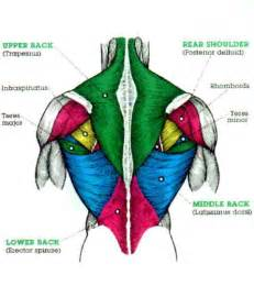 back muscle pain picture 3