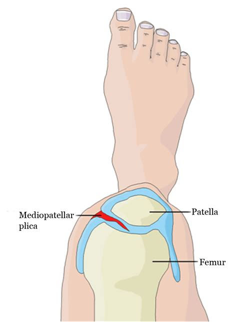 picture knee joint picture 3