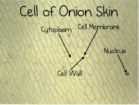 cell skin reproduction picture 19