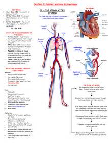 anatomy and physiology of cesarean picture 3