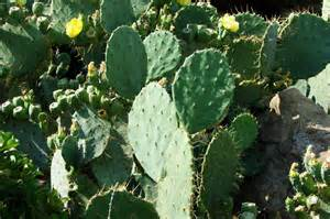 cactus picture 17