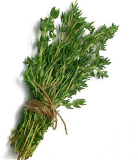 herbal plus oregano picture 6
