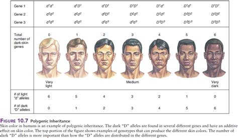 is skin color hereditary picture 1