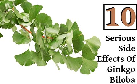 side effects of ginkgo biloba picture 3