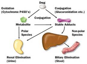 drugs that are metabolized by the liver picture 1