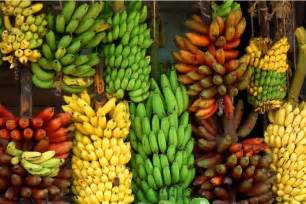 banana plantain varieties picture 13