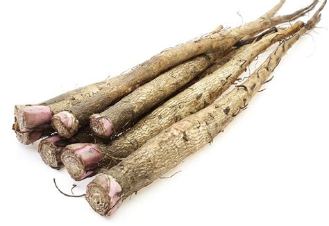 Burdock Root picture 7