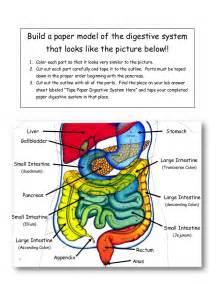 diagram descending colon picture 10