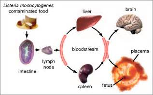 definition microbial food supplements picture 11