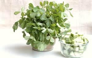 fenugreek plant buy picture 1
