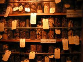 Herbal medicine and their cure picture 9